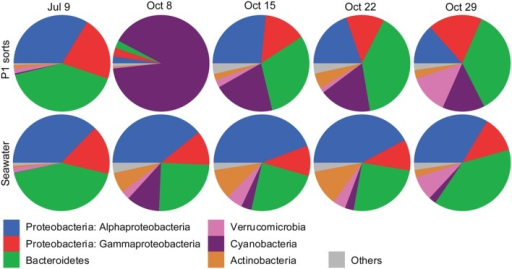 Pie graphs showing the phylogenetic affiliations of non-Eukaryota 16S rRNA gene sequences in photosynthetic picoeukaryote sorts (P1, 1,000 cells), and bulk seawater (0.2–10 μm) from Illumina MiSeq libraries for each sampling date. The absolute numbers of sequences for the triplicate sort samples from each sampling date have been pooled. The colors for each phyla are indicated below the graphs.