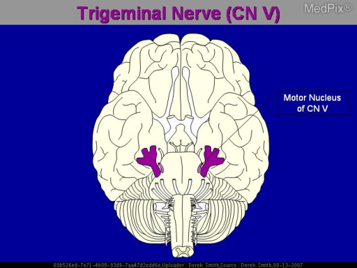 Diagram of the trigeminal nerve the fifth cranial nerve.  Named because it gives three branches: ophthalmic; maxillary; and, mandibular.