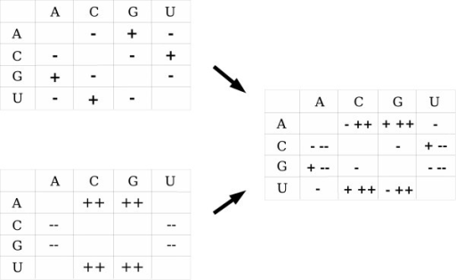 Theoretical stem substitution matrices. Left top: Stem deviation matrix due to influences of transitions/transversions and of GU intermediate state on stem substitution matrices. Left bottom: Stem deviation matrix due to influences of GC stability. Right: Stem deviation matrix due to all the influences.