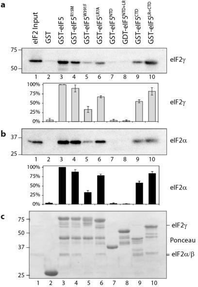 The CTD of eIF5 is critical for interaction with eIF2Affinity chromatography assay between eIF2 (110 pmol) and the indicated immobilized GST-eIF5 constructs. eIF2 was detected by immunoblotting using antibodies specific for a) eIF2γ or b) eIF2α. Representative blots are shown. Signal intensity was quantified (Adobe Photoshop) and the mean ± standard deviation (n=3) are shown below. c) Total protein in each sample stained with Ponceau S. Inputs (lanes 1) represent 10% of total.
