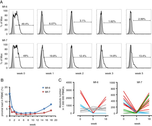 Effect of anti-CCR4 antibody on STLV-1 dynamics in vivo. (A) CD3+CD4+ T cells were gated and the expression of CCR4 was analyzed by flow cytometry. (B) Changes in STLV-1 proviral load in two monkeys treated with anti-CCR4 antibody until week 3. (C) Absolute cell numbers of the five most abundant clones in 1,000,000 PBMCs at weeks 0, 5 and 18 are shown.