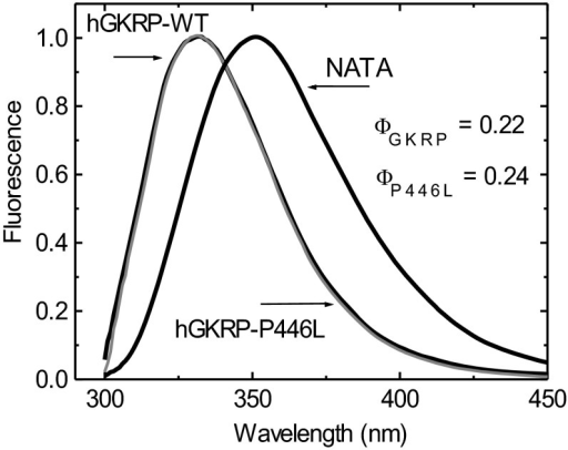 Normalized TF spectra for 0.3 μM GKRP-WT and GKRP-P446L compared with tryptophan–NATA (λexc=295 nm)