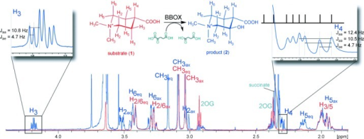 1H NMR assignments of the BBOX-catalyzed hydroxylation of achiral N,N-dimethyl piperidine-4-carboxylic acid (1). An overlay of the 1H NMR spectrum of a reaction mixture containing 1 prior to (red) and after (blue) BBOX incubation reveals the formation of a new species (2). The pattern of the coupling constants for H3 and H4 of 2 demonstrate that the C3=H and C4=H bonds are both axial. The signal for C4=H partly overlaps with other signals of the reaction mixture.