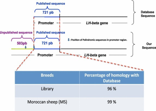 Schematic representation of the promoter region of the LH beta gene from a library screening of the Moroccan sheep database sequence: Homology sequence analysis revealed that the two sequences shared more than 96% homology with the reference sequence available in the database after alignment (Brown et al. 1993).