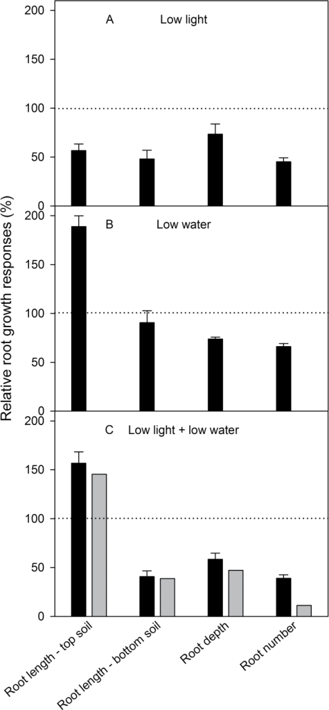 Summary of root growth responses of VJ 10 wheat plants to leaf irradiation and soil moisture 20 days after germination. Ratio between plants exposed to control conditions (moderate light and well watered) and the other three treatment combinations: (A) reduction in light intensity; (B) reduction in soil moisture; and (C) reduction in both light and soil moisture; quantified for root length in the top and bottom part of the rhizoboxes, root depth, and number of lateral roots. Values prior to plants exposed to control conditions were set to 100% (mean value ±SE, n = 4). Additionally, the theoretical root growth reduction under low light combined with low soil moisture (grey bars, C) was calculated as the sum of relative growth reductions under low light and the relative growth reductions under low soil.