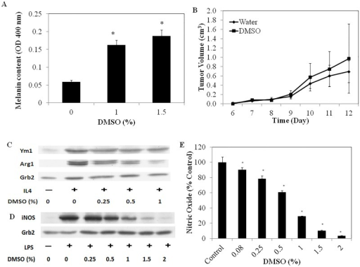 (A) The effect of DMSO on melanin production in B16/F10 melanoma cells. *denotes significant difference (P<0.05) in melanin content to non-DMSO treated cells (B) The effect of topical administration of 70% DMSO on the growth of subcutaneously implanted B16/F10 melanoma cells in C57BL/6 mice (n = 8) (C) The effect of DMSO on murine M2 mФ skewing in response to 10 ng/ml IL-4 measured after 72 h of incubation (D) The effect of DMSO in modulating iNOS expression and (E) NO production from M1-skewed murine mФs, measured after 24 h of incubation of cells with 100 ng/mL LPS.