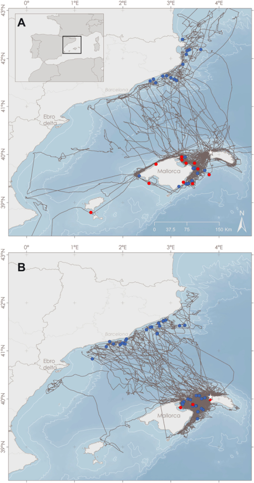 Shearwater GPS tracks (in grey) and concurrent interactions between shearwaters and fishing vessels (dots) inferred from the Vessel Monitoring System (VMS) in 2010 (A) and 2012 (B). Red dots correspond to interaction with longliners and blue dots to interactions with trawlers. Maps were generated with ArcGis version 10.3 (URL: https://www.arcgis.com).