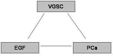 The possible triangular relationship between EGF, VGSC and PCa.