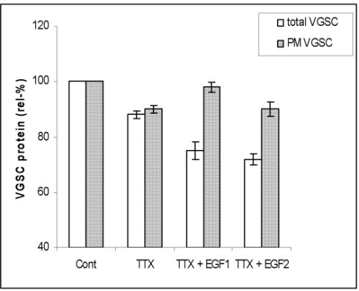 Effects of TTX (500 nM) and TTX+EGF on respective relative levels of total and plasma membrane (PM) VGSC protein expression, presented as a percentages of respective controls (Cont). Two concentrations of EGF were used: 50 ng/ml (EGF1) and 100 ng/ml (EGF2). Relative levels of total VGSC were deduced from Western blots (as in Fig. 2). Relative levels of PM expression were obtained from immunocytochemistry/digital analysis(as in Fig. 4). Each histobar denotes mean ± standard error (n = 3–6). Light bars, total VGSC protein. Shaded bars, VGSC protein expressed in plasma membrane (PM).