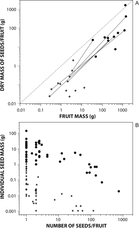 Bivariate plots of fleshy fruit traits for megafauna and non-megafauna species.Dots, megafauna-fruit species; +, non-megafauna fruited species. (A) dry mass of seeds per fruit and fruit mass. Intrafamilial comparisons are indicated by connecting lines between dots and +s; (B) individual seed mass and number of seeds per fruits.