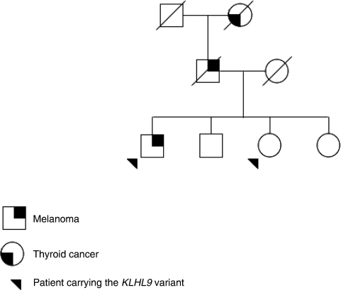 Family tree of patient carrying the KLHL9 variant.