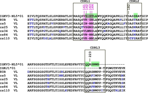 Sequence alignment of the Vk of five Abs identified from 80R-Vk-cs library and 80R.The best-matched germline Vκ and Jκ genes of 80R are showed on top of the alignment. CDR regions are labeled in large boxes, amino acid substitutions from germline are colored in blue. A dash indicates no amino acid at that position. Amino acids 161–164 in CDRL1 were highlighted in pink. All 5 Abs have one consensus change from S to N at position 163. WRCY hot spots of AID are colored in green.