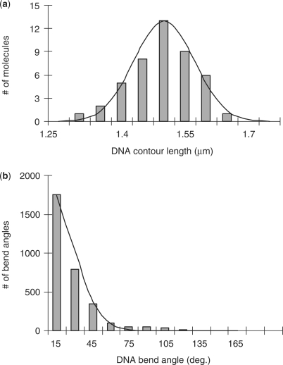 (a) The distribution of bare dsDNA contour lengths and its Gaussian fit. (b) The local bend angle distribution for bare dsDNA (segment step size 10 nm) and Gaussian fit.