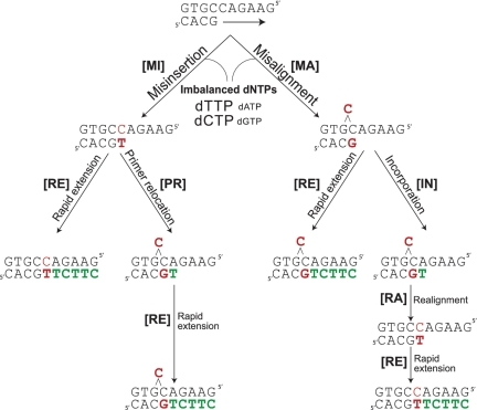 Models for substitutions and deletions resulting from imbalanced dNTP pools. MI: misinsertion; MA: misalignment; PR: primer relocation; RE: rapid extension; IN: incorporation; RA: realignment. Red characters represent the mutational event and green characters represent bases where the dNTP is at an excessively high concentration.