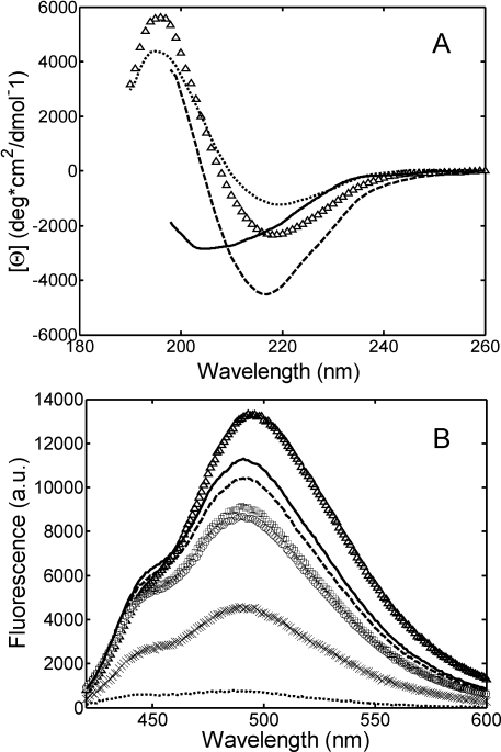 Light chain structural changes induced by salt addition monitored by CD (A) and ANS binding (B).Experiments were performed at 20°C for a 0.3 g/L protein solution in 25 mM PBS at pH 7.4 (…) and in 20 mM HCl buffer at pH 2.0 without salt (▵), with 0.15 M NaCl (–),0.15 M Na2SO4 (―), 0.45 M NaCl (○), 0.49 M NaH2PO4 (□) and 0.5 M Na2SO4 (×).