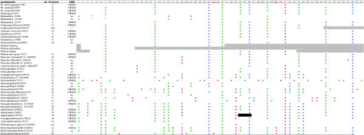 Intron positions in the transferred α-amylase gene homologous to Phchr1/7087/ found in Fungi. Pink dots: phase 0 introns; green dots: phase 1 introns; blue dots: phase 2 introns. Shaded regions represent unknown sequences. The black bar is a region of uncertain annotation. Asterisks indicate possible cases of intron sliding. CBM20 indicates the presence of an additional carbohydrate binding module of the CBM20 family. The number of introns is meant without the CBM20 extension.