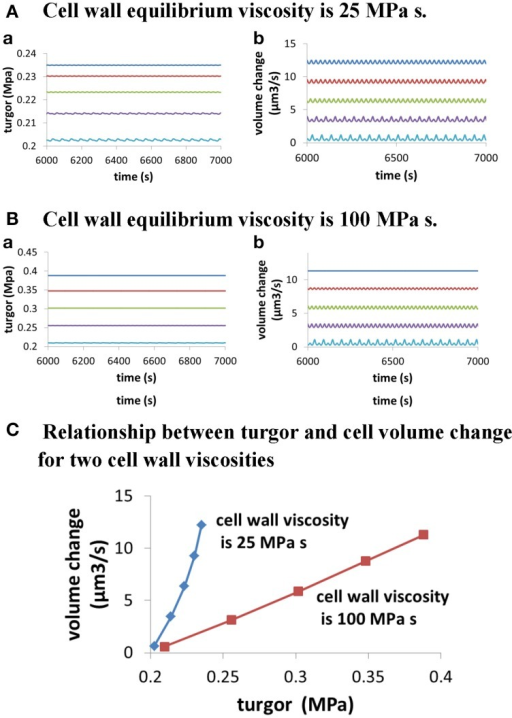 Dependence of cellular turgor and volume change of pollen tube on osmolarity in the media for two cell wall viscosities. In both (A,B), osmolarity in the media increases from 0.06 to 0.46 Osm by increasing 0.1 Osm each time from top to bottom. When osmolarity increases in the media, cellular turgor decreases. (A) Dependence of cellular turgor and volume change of pollen tube for osmolarity in the media for low cell wall viscosity (25 MPa s) (i.e., large cell wall extensibility). (B) Dependence of cellular turgor and volume change of pollen tube on osmolarity in the media for high cell wall viscosity (100 MPa s). (C) Dependence of volume change of pollen tube on turgor for two cell wall viscosities.