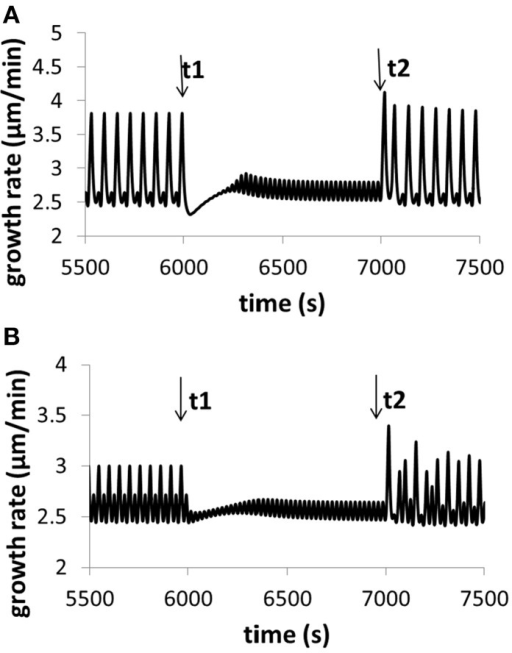 Variation of growth rate for (A) different calcium concentrations in the media, and (B) different pH in the media. Osmolarity in the media is 0.36O sm. (A) At time t1, [Ca2+] in the media increases from 0.13 to 1.3 mM (the reference value used in this work is 1 mM). The oscillatory amplitude of growth rate decreases and the baseline growth rate increases. At time t2, [Ca2+] returns the original 0.13 mM. The oscillatory amplitude of growth rate increases and the baseline growth rate decreases. (B) At time t1, pH in the media decreases to 5.1 from 5.7 (the reference value used in this work is 5.7). The oscillatory amplitude of growth rate decreases and the baseline growth rate slightly increases. At time t2, pH returns the original 5.7. The oscillatory amplitude of growth rate increases and the baseline growth rate slightly decreases. These results are qualitatively in agreement with experimental observations (Messerli and Robinson, 2003), although the range of varying pH in experiments (Messerli and Robinson, 2003) is much wider. Modeling results show that, when [Ca2+] in the media increases from 0.13 to 1.3 mM, although oscillatory amplitudes of growth rate change, the average growth rates for the two media conditions are approximately the same. The reason is as follows. The 10-fold increase (from 0.13 to 1.3 mM) of [Ca2+] in the media only leads to a change of 0.04 and 0.4% in the osmolarity in the media. Thus, the contribution of this 10-fold of [Ca2+] increase to the osmolarity in the media is insignificant.