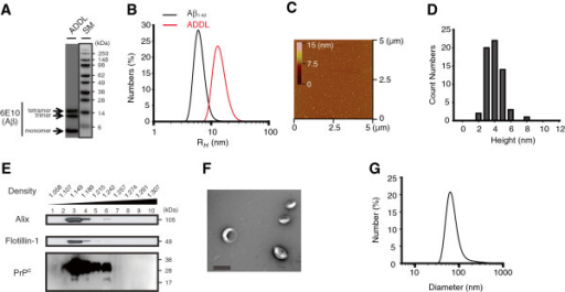 Characterization of ADDLs and exosomes used for biochemical and physiological experiments. (A) ADDLs were analyzed by Western blotting using 6E10. SM, size markers (kDa). (B) DLS particle distribution analysis of ADDLs (red line) (14.3 ± 1.1 nm) and Aβ1-42 freshly dissolved in 10 mM NaOH (black line) (6.4 ± 0.3 nm) was expressed as hydrodynamic radii (RH). (C) A tapping AFM mode image of ADDLs (X-Y, 5 x 5 μm with an inset displaying a z-range in color from 0 to 15 nm). (D) By AFM, only small (3 - 6 nm) globular structures were detected. (E) Exosomes isolated from the conditioned medium of N2a cells had their density 1.13 g/ml to 1.19 g/ml, and contained the exosomal marker proteins Alix, Flotilin-1 and PrPC. Multiple (non-, mono- or di-) glycosylated PrPC proteins were detected between 20 ~ 35 kDa on SDS-PAGE. (F) By EM, exosomes appeared as closed vesicles of 30-120 nm in diameter (Scale bar: 100 nm), (G) a size range that agreed with that measured by DLS.