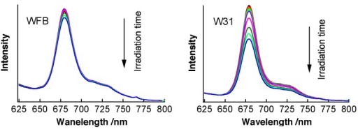 Time dependence of fluorescence spectra of Na-Ph-a in WFB (left) and W31 (right) cells with irradiation of 405-nm light in air. The irradiation times were 0, 1, 2, 3, 4, 5, 10, 20, 30 and 40 min. The concentration of Na-Ph-a in the culture solution was 10 μM.