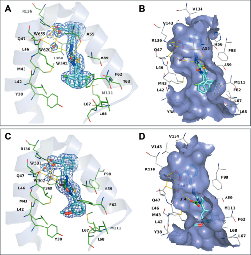 X-ray structure determination of hDHODH in complex with 19 (PDB ID: 4LS1) and 27 (PDB ID: 4LS2).(A) 2Fo-Fc electron density (blue) for 19 contoured at 1σ. Critical residues are represented as thin green sticks. (B) Specific binding information of the tunnel-like binding site of 4LS1. The surface of the binding site is colored purple. Compound 19 is displayed as cyan sticks and important residues are represented as gray lines. (C) 2Fo-Fc electron density (blue) for 27 contoured at 1σ. (D) Specific binding information of the tunnel-like binding site of 4LS2. Compound 27 (cyan) and acetate molecule (green) are displayed in stick mode. Water molecules are displayed as red balls and hydrogen bonds are shown as yellow dashed lines.