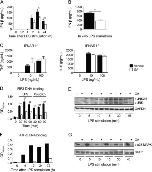 Glatiramer acetate treatment negatively regulates IFN-β production by targeting components of the IFN-β enhanceosome(A) Wild-type (WT) monocytes differentiated in the presence or absence of glatiramer acetate (GA) were stimulated with lipopolysaccharide (LPS) (100 ng/mL) for 24 hours. Interferon (IFN)–β secretion was quantitated in cell culture supernatants by ELISA. Results are representative of 2 experiments. Data are presented as mean ± SEM; *p < 0.05, **p < 0.01 as determined by Student t test. (B) WT mice (n = 3/group) treated with GA or vehicle were injected IP with LPS (100 ng/kg). Serum levels of IFN-β were quantitated by ELISA, 5 hours following injection. Data are representative of 2 separate experiments. (C) Interferon-α/β receptor subunit-1 (IFNAR1)–deficient monocytes differentiated in the presence or absence of GA were stimulated with LPS at the indicated dose for 24 hours. Tumor necrosis factor (TNF) and interleukin-6 secretion was quantitated in cell supernatants by ELISA. Results are representative of 3 independent experiments (n = 3/group). (D) Monocytes generated in the presence or absence of GA were stimulated with LPS (100 ng/mL) or Poly(I:C) (10 μg/mL) for the indicated duration. IRF3 binding activity in nuclear extracts was measured with TransAM IRF3. (E) Monocytes generated in the presence or absence of GA were stimulated with LPS (100 ng/mL) for the indicated duration. Cell lysate proteins were separated by sodium dodecyl sulfate polyacrylamide gel electrophoresis (SDS-PAGE) and membranes were probed for phosphorylated SAPK/JNK (Thr183/Tyr185) and total GAPDH. Data are representative of 3 separate experiments. (F) Monocytes differentiated in the presence or absence of GA and stimulated with 100 ng/mL LPS for the indicated duration. DNA binding of ATF-2 was quantitated from nuclear extracts. (G) Monocytes generated in the presence or absence of GA were stimulated with LPS (100 ng/mL) for the indicated duration, and whole-cell lysates were subjected to SDS-PAGE and Western blot analysis for phosphorylated p38 MAPK (Thr180/Tyr182) and total STAT1. Data are representative of 3 separate experiments.