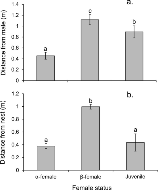 Rank affects access to resources for females.Proximity of female Pomacentrus amboinensis to the male (A) or nest site (B). Errors are standard errors. Letters represent Tukey's HSD groupings of means. N = 8 social groups.