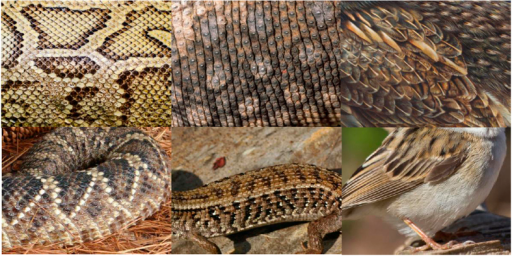 Illustrative examples of stimuli depicting snake skin, lizard skin, and bird plumage stimuli (top row) and examples of stimuli depicting partially exposed snakes, lizards, and birds (bottom row).For copyright reasons, the depicted photographs are public domain (pixabay.com); they are similar to the actual stimuli, but were not used in the experiment.