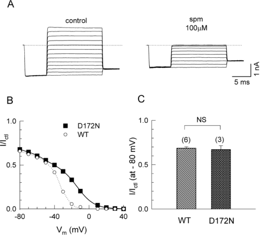 Effect of neutralizing D172 on spermine block. (A) Representative macroscopic current recordings from oocytes expressing wild-type and D172N channels in the absence and presence of 100 μM spermine. (B) Ratio of the steady-state current in the presence of spermine (I) to that in its absence (Ictl) vs. voltage for WT (the same values as Fig. 6 B) and D172N. The smooth lines are fitted value to model 2 in Fig. 8 B. (C) Bar graph comparing the reduction in the currents at −80 mV by 100 μM spermine, in WT (n = 6), D172N (n = 3).