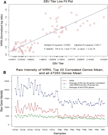 (A) Correlation of WRN to relative EBV titer across the filtered CEU and YRI samples and (B) the distribution of non-normalized WRN values and the mean values of the 20 genes across the CEU and YRI populations and for all the transcripts measured on the arrays.
