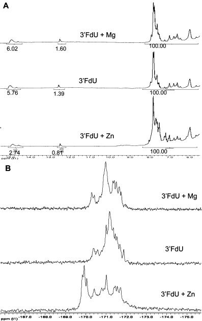 (A) 1H NMR spectra showing no significant intensity change for the imino region for the 3′-FdU hairpin in the presence of Zn2+ or Mg2+; (B) 19F NMR spectra showing that Zn2+, but not Mg2+, results in significant downfield shifts.