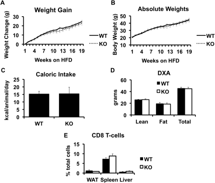 Weight gain and body composition of wild type (WT) and CD1d  (KO) littermate mice on a high fat diet.Weight gain and caloric intake were assessed in high-fat fed wild-type and CD1d knock out mice, as described in Methods (Panels A–C). All mice underwent dual x-ray absorbitometry (DXA) as described in Methods (Panel D). CD8+ T-cells were assessed by FACS (Panel E). Results are presented as the means±SE for a minimum of 5 animals in each group.