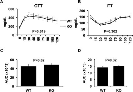 Glucose and insulin tolerance in wild-type and CD1d  mice.High fat fed wild-type (WT, n = 11) and CD1d  (KO, n = 9) mice underwent glucose tolerance tests (GTT) as described in Methods. After 1 week for recovery, all mice underwent insulin tolerance tests (ITT) as described in Methods. Results are presented as the means±SE.