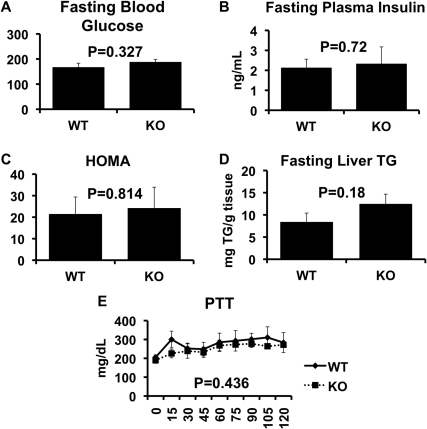 HOMA, Hepatic Glucose Output and liver triglycerides in wild-type and CD1d  mice.Fasting blood glucose (Panel A, n = 11 WT and n = 9 KO) and plasma insulin (Panel B, n = 7 WT, n = 5 KO) concentrations, Pyruvate Tolerance Test (Panel E, n = 4 WT and n = 4 KO) and liver triglycerides (Panel D, n = 11 WT and n = 9 KO) were assessed in WT and KO mice as described in Methods. Results are presented as the means±SE.