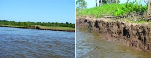 Solimões River bank showing floodplain and water table where soil samples were collected. Photos: Dr. Rubens T. Honda.
