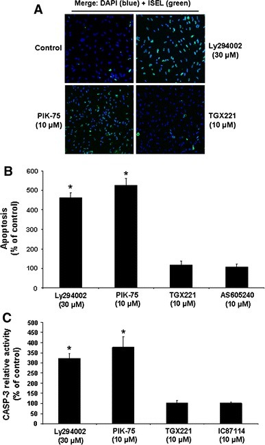 Selective roles of PI3-K C isoforms in the maintenance of HIEC cell survival. a Representative (n ≥ 4) double labeling-merged immunofluorescence micrographs of untreated HIEC cell cultures (control) and of cultures treated with Ly292002, PIK-75 or TGX221. ISEL (green) was thereafter performed, with DAPI (blue) counterstaining of nuclei. Original magnification: 20×. b HIEC cell cultures were maintained as in (a), in addition to being also treated with AS605240. ISEL was then performed. Statistically significant (0.0001 ≤ P ≤ 0.001) differences between treated and control cultures are indicated by (*). c HIEC cell cultures were maintained as in (a), in addition to being also treated with IC87114. CASP-3 relative activity was then established, using the substrate Ac-DEVD-AMC, by comparison to controls. Statistically significant (0.0005 ≤ P ≤ 0.005) differences between treated and control cultures are indicated by (*) (Color figure online)