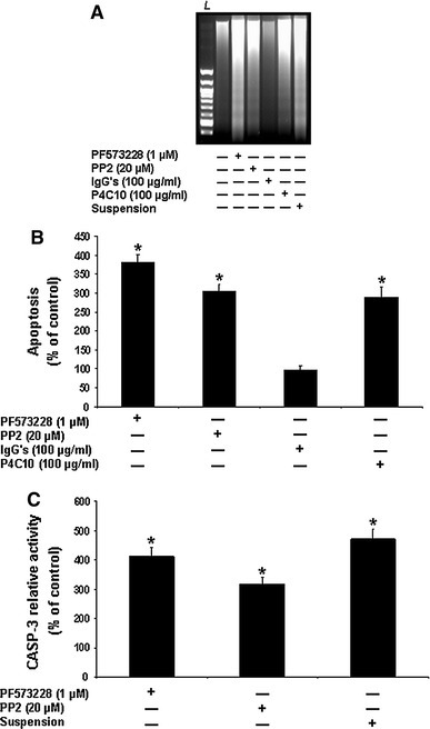 β1 integrin/Fak/Src-mediated signaling requirement for anoikis suppression in HIEC cells. a Representative (n ≥ 5) CAD-mediated DNA laddering assays from HIEC cell control cultures or cultures treated with PF573228, PP2, non-immune IgGs, the β1 integrin-blocking antibody P4C10, or kept in suspension in polyHEMA-coated dishes (suspension). L 100-bp DNA size markers. b HIEC cell cultures were maintained as in (a), except without the suspension treatment. ISEL was then performed. c HIEC cell cultures were maintained as in (a), except without the IgGs and P4C10 treatments. CASP-3 relative activity was then established, using the substrate Ac-DEVD-AMC, by comparison to controls. b, c Statistically significant (0.0001 ≤ P ≤ 0.001) differences between treated and control cultures are indicated by (*)