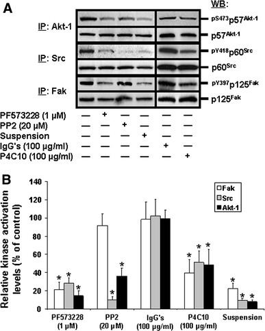 Integrin-mediated engagement of Fak, Src and PI3-K/Akt-1 in HIEC cell survival and suppression of anoikis. a Representative (n ≥ 3) WB analyses of Akt-1, Src and Fak IPs from HIEC cell control cultures or cultures treated with PF573228, PP2, non-immune IgGs, the β1 integrin-blocking antibody P4C10, or kept in suspension in polyHEMA-coated dishes (suspension). Specific antibodies for pS473p57Akt-1, pY418p60Src and pY397p125Fak, as well as for respective total protein forms, were used. b HIEC cells were maintained as in (a), except that the relative activation levels of Fak (open columns), Src (grey columns) and Akt-1 (filled columns) were established, then compared to controls. Statistically significant (0.0005 ≤ P ≤ 0.005) differences between treated and control cultures are indicated by (*)