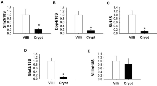 Difference in differentiation markers expression within intestinal mucosa.The level of Slfn3 was significantly lower in crypts of mucosa compared to villi (p<0.05, n = 6). The transcript levels of Dpp4 (B), SI (C), Glut2 (D) but not villin (E) were significantly lower in jejunal crypts compared to villi (p<0.05, n = 6).