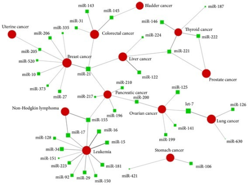 Network illustrated significant associations of miRNAs and cancers. Red circles and green squares represent cancers and miRNAs, respectively, with different sizes according to the number of corresponding annotated papers (logarithmic). Each link represents a miRNA-cancer association with colour and width according to the strength of relationship.