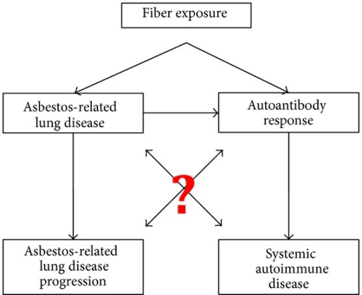 Proposed relationships between asbestos exposure, autoimmunity, and fibrotic lung disease progression. Data (as mentioned in the text) support the connections indicated, but questions remain regarding (a) the types of fibers that are responsible and (b) the etiological and mechanistic bases for the outcomes.