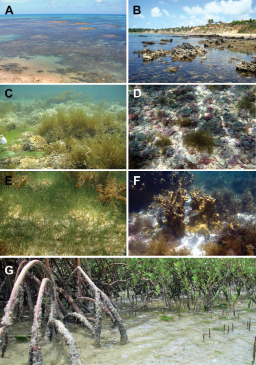 Some littoral environmnets and shallow-water biotopes used as habitats by sea stars in northeastern Brazil. A Fringing reef B Beach rocks CAlgae banks D Rhodolith bed E Seagrass bed F Patch reef, and G Mangroves. Photos: Thelma LP Dias.