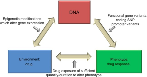 Premise of pharmacogenetics research in complex diseases.Notes: Pharmacogenetics research studies a gene-by-environment interaction, by analyzing the effect of genotype and exposure to a medication in determining interindividual responses to pharmacologic therapies. Reprinted from Immunol Allergy Clin North Am. 2007;27(4). Ortega VE, Hawkins GA, Peters SP, Bleecker ER. Pharmacogenetics of the beta 2-adrenergic receptor gene. 665–684; vii. Copyright © 2007 with permission from Elsevier.83Abbreviation: SNP, single nucleotide polymorphism.