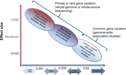 Impact of genetic variants in human disease.Notes: Multiple common genetic variants with small to modest effect sizes contribute to common disease susceptibility and therapeutic responsiveness in an additive fashion. Genome-wide association studies have identified common variants associated with risk for asthma, response to short-acting beta agonists, and response to inhaled corticosteroids. In contrast, rare genetic variants contribute to susceptibility for common diseases and, potentially, response to pharmacologic therapies with a large effect size. Adapted from Tsuji S. Genetics of neurodegenerative diseases: insights from high-throughput resequencing. Hum Mol Genet. 2010;19(R1):R65–R70.84