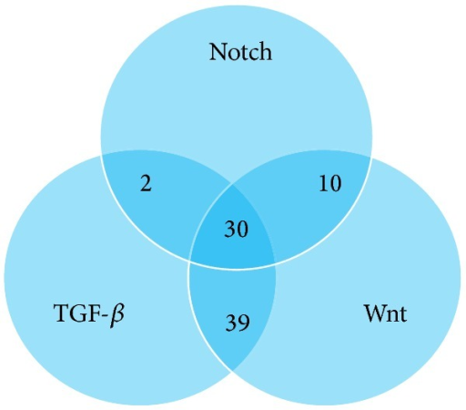 Venn diagram showing number of overlapping, experimentally validated miRs targeting KEGG pathway genes from the TGF-β, Wnt, and Notch pathways.