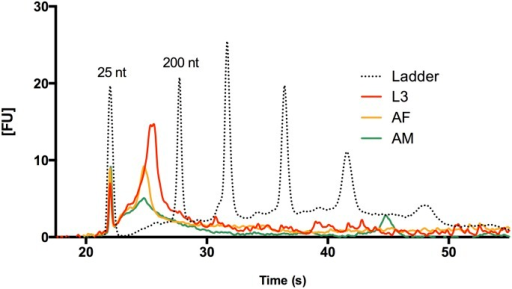 Isolation of Small RNAs from larval and adult B. malayi ELV fractions.Bioanalyzer data are shown for RNAs isolated from L3, adult male, and adult female Brugia preparations. L3 ELVs contain significant amounts of small RNAs in the 25–200 nt range (25 and 200 nt reference peaks labeled), while adult male and female vesicle preparations yield fewer RNAs. Vesicle fractions were prepared from 300 L3 and 30 adults in 24 hr culture incubations. Despite the much higher total tissue amounts used in adult culture, we detect much higher levels of small RNAs in L3-derived ELVs.