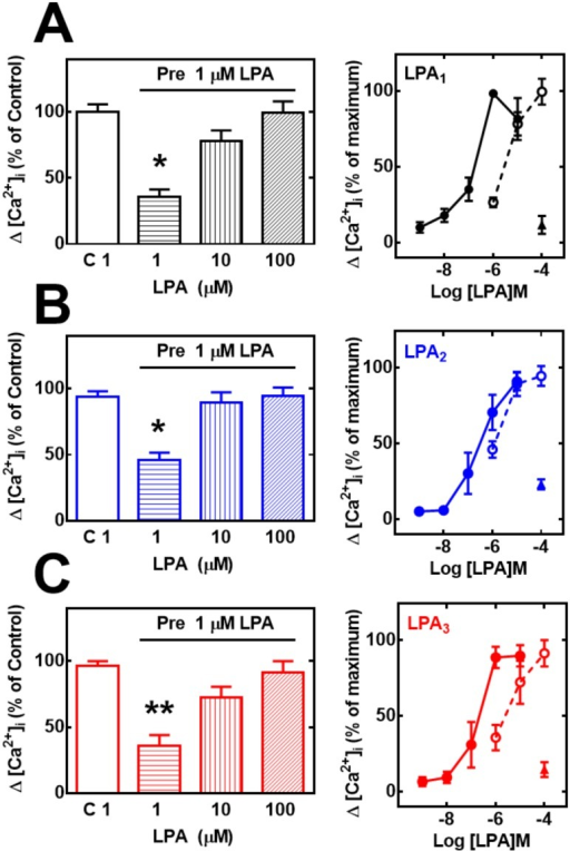 Effect of preincubation with PMA (heterologous desensitization) or LPA (homologous desensitization) on LPA-induced intracellular calcium concentration ([Ca2+]i) using high agonist concentrations.Cells overexpressing LPA1 (panel A, black), LPA2 (panel B, blue) or LPA3 (panel C, red) receptors were preincubated in the absence or presence of 1 μM LPA for 10 min, extensively washed, then challenged with the indicated concentrations of LPA, and the increase in intracellular free calcium concentration was determined. Plotted are the increases in calcium as the percentage of that obtained in cells preincubated without any agent and challenged with 1 μM LPA (C 1 in the abscisa) (% of control) as mean ± S. E. M. of 6 experiments using different cell preparations. In the right panels concentration response curves are plotted. Data from Fig 1 (without pre-stimulation) were normalized and re-plotted as percentage of the maximal response (solid symbols and continuous connecting lines) together with those in the left panels of this figure, normalized in the same way (open symbols, dotted connected lines). The response of cells preincubated with 1 μM PMA for 2 min, washed, and then challenged with to 100 μM LPA is also presented (solid triangles).