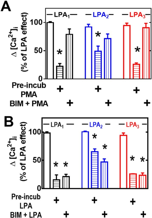 Effect of PKC inhibition on heterologous (PMA-induced) or homologous (LPA-induced) desensitization.Cells overexpressing LPA1–3 receptors were preincubated for 15 min in the presence of the PKC inhibitor, bisindolylmaleimide I (BIM), and then subjected to the desensitization protocols (indicated under the Experimental section and in Fig 2), using 1 μM PMA or 1 μM LPA. Cells were challenged with 1 μM LPA and the increase in intracellular free calcium concentration was determined. Plotted are the increases in calcium as the percentage of that obtained in cells preincubated without any agent as mean ± S. E. M. of 6–8 experiments using different cell preparations. *p < 0.001 vs. baseline.