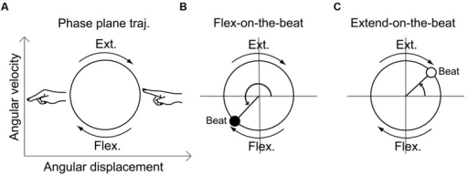 Schematic illustration of the movement trajectory on a phase plane (A) and the phase angle at a beat onset time during the flex-on-the-beat pattern (B) and the extend-on-the-beat pattern (C). The phase plane is composed of the angular displacement and the angular velocity.