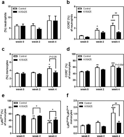 LPA1/3 inhibition retains circulating CCR2+ neutrophils and monocytes at low levels while increasing, Ly6Clow patrolling monocytes over time.(a) No difference was observed in the circulating neutrophil percentage between the two groups of animals. (b) CCR2+ expressing neutrophils were reduced after 4 weeks of LPA 1/3 antagonism. (c) Circulating monocytes showed a slight reduction upon 4 weeks of Ki16425 treatment (d) CCR2+ monocytes remained at lower levels in the course of LPA1/3 inhibition. (e) Non-inflammatory monocytes appeared significantly higher at 2 and 4 weeks of LPA1/3 inhibition. (f) The ratio of inflammatory/non-inflammatory monocytes was increased in the control group compared to the treated. All values are calculated as mean ± SEM. (n = 12/grp, *P < 0.05, **P < 0.01, ***P < 0.001, **** P < 0.0001).
